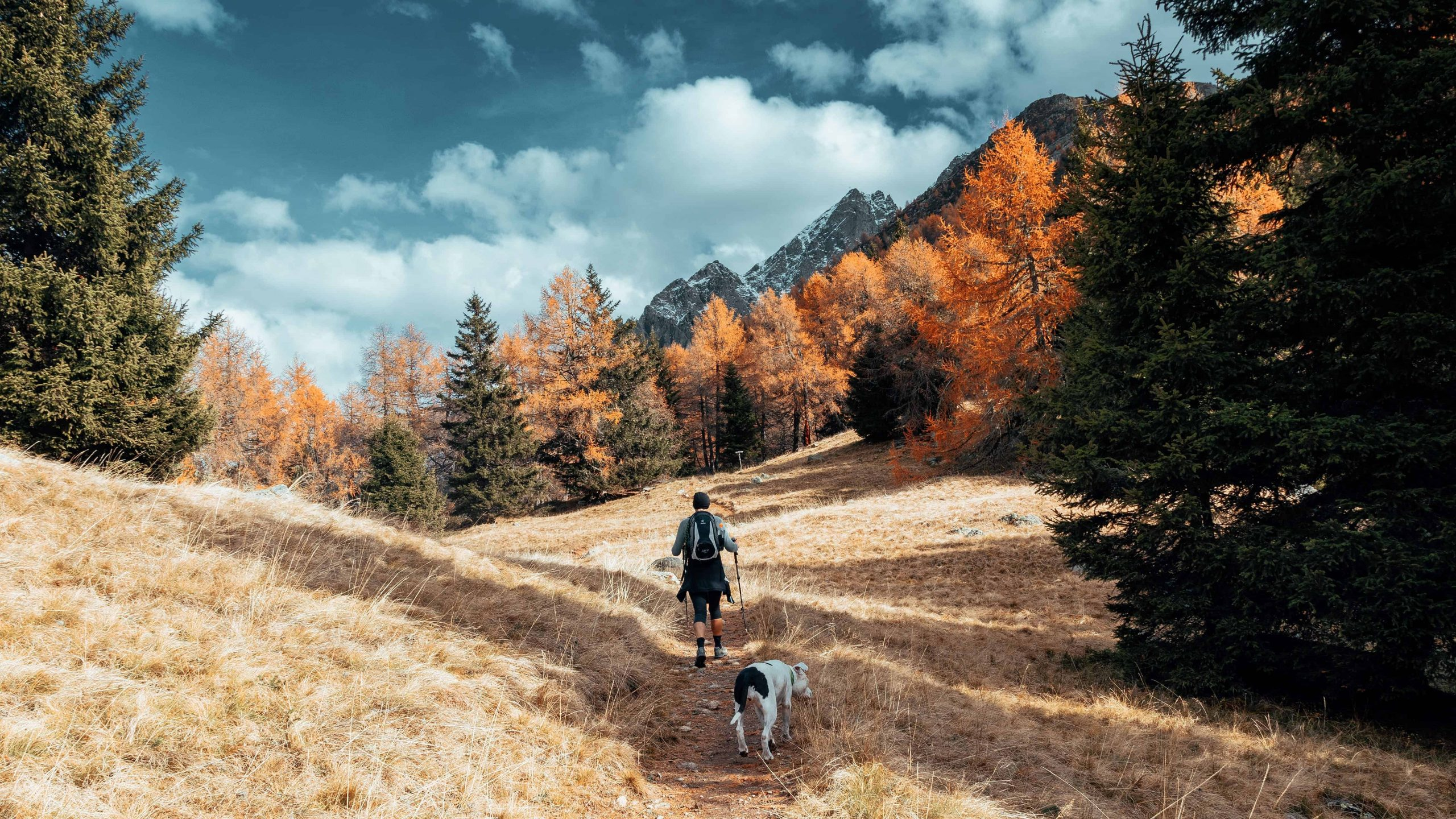 hiking with your dog
