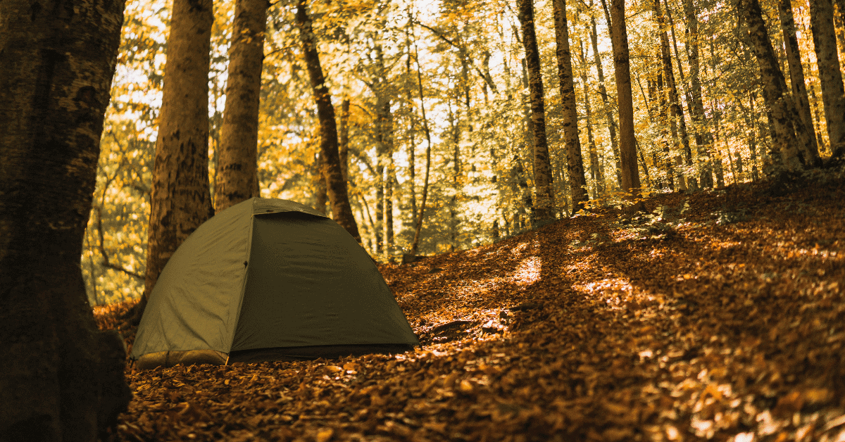 tent in the forest surrounded by fall leaves