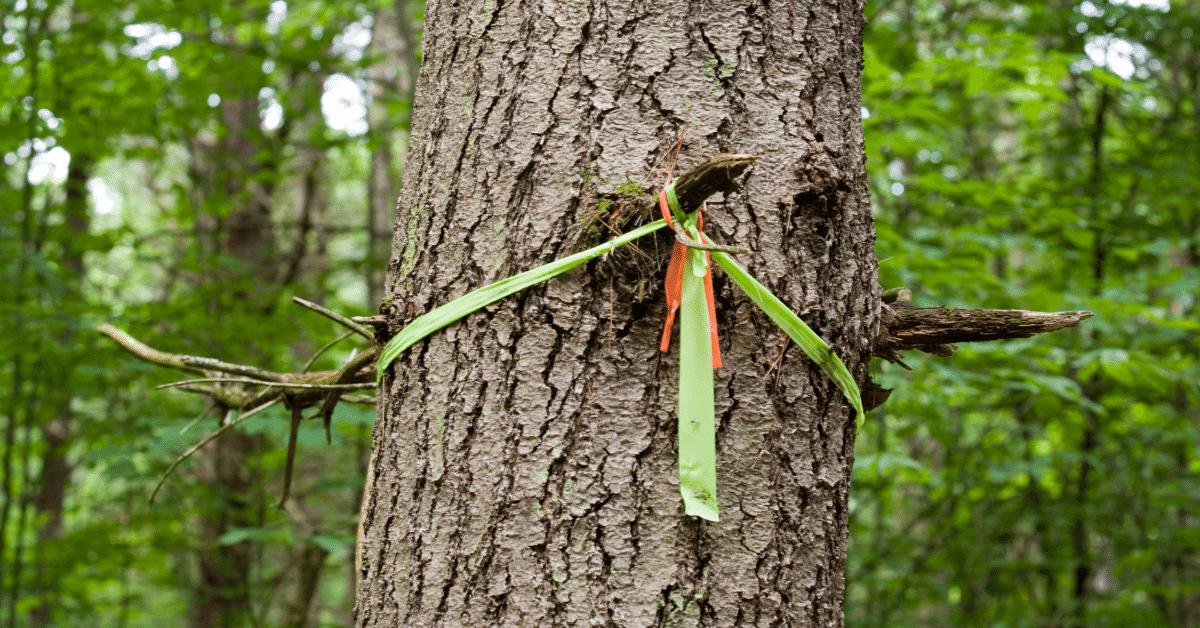 a ribbon tied to a tree