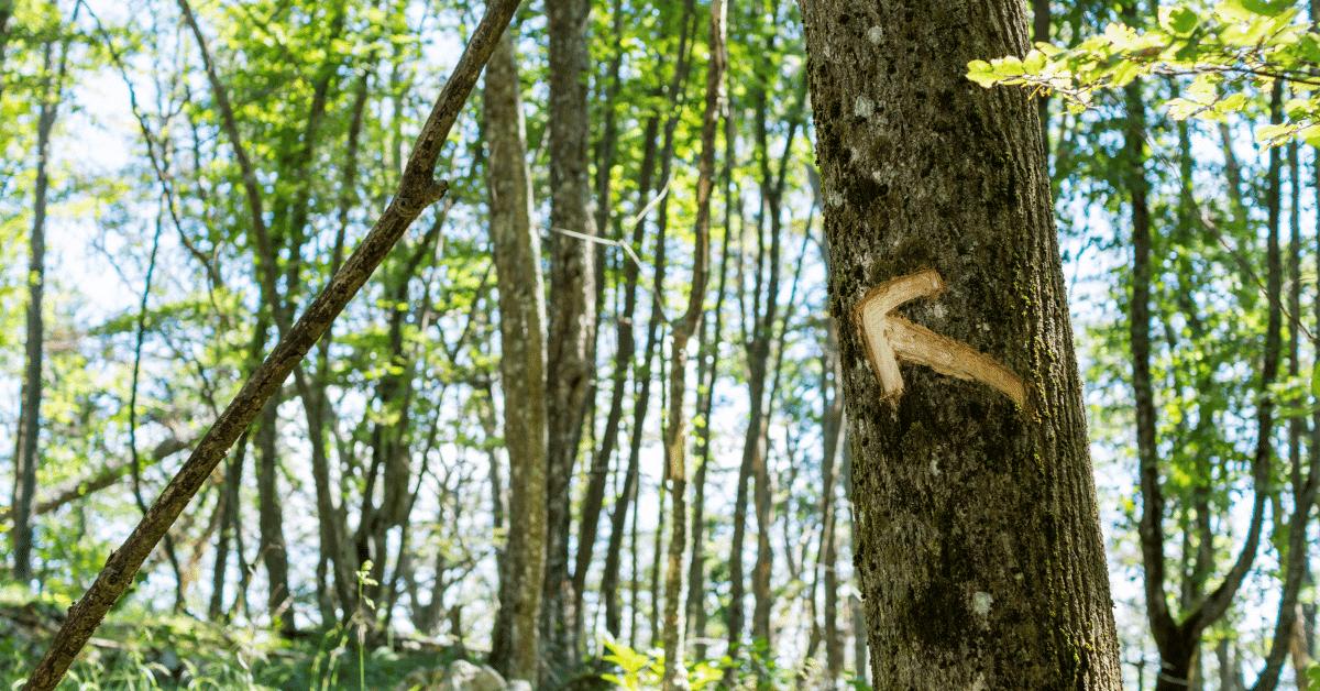 an arrow carved into a tree