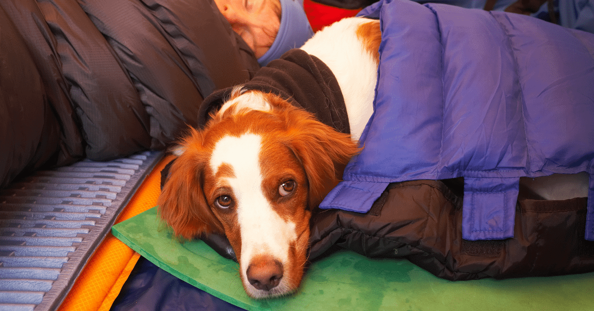a dog in a sleeping bag in a tent