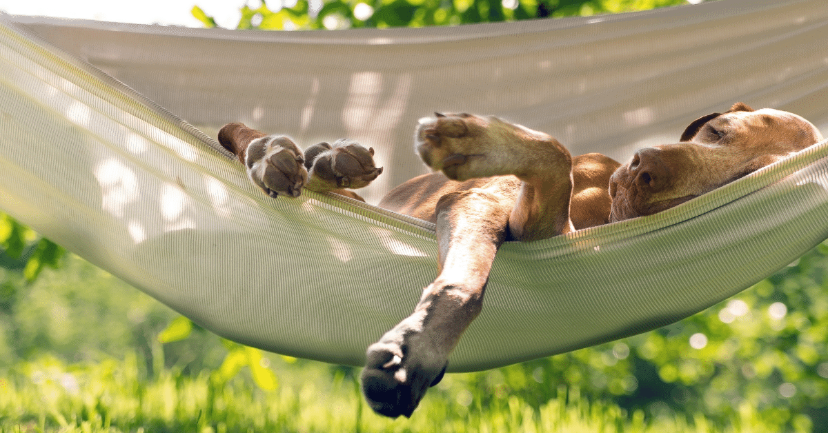 a dog sleeping in a hammock