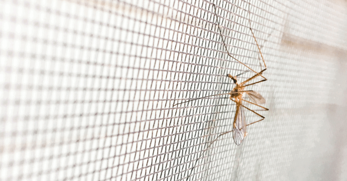 a mosquito on a mesh net