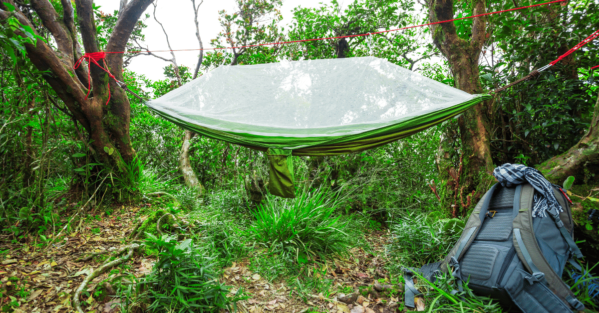 a hammock with a bug net hanging between two trees