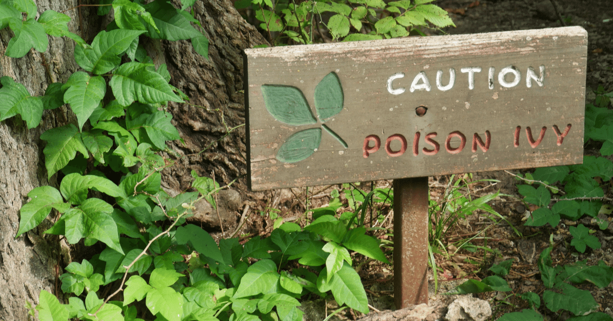 a sign warning of poison ivy