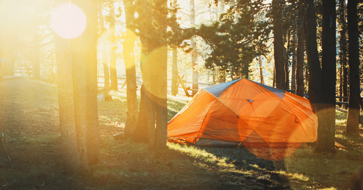 an orange tent in the woods